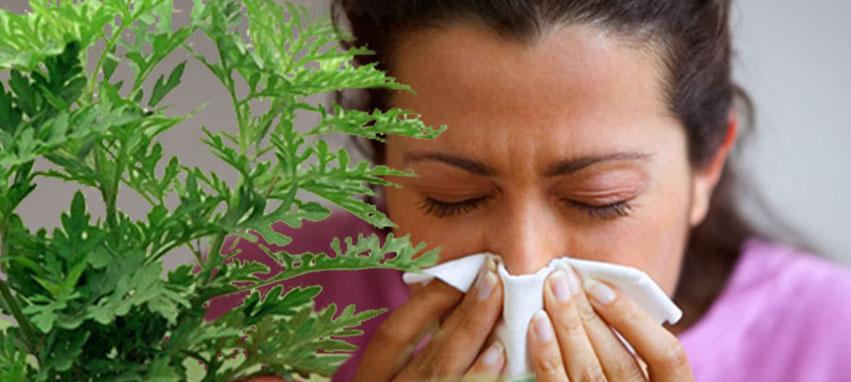 Klíma - pollenszűrő tisztítás, karbantartás országosan!